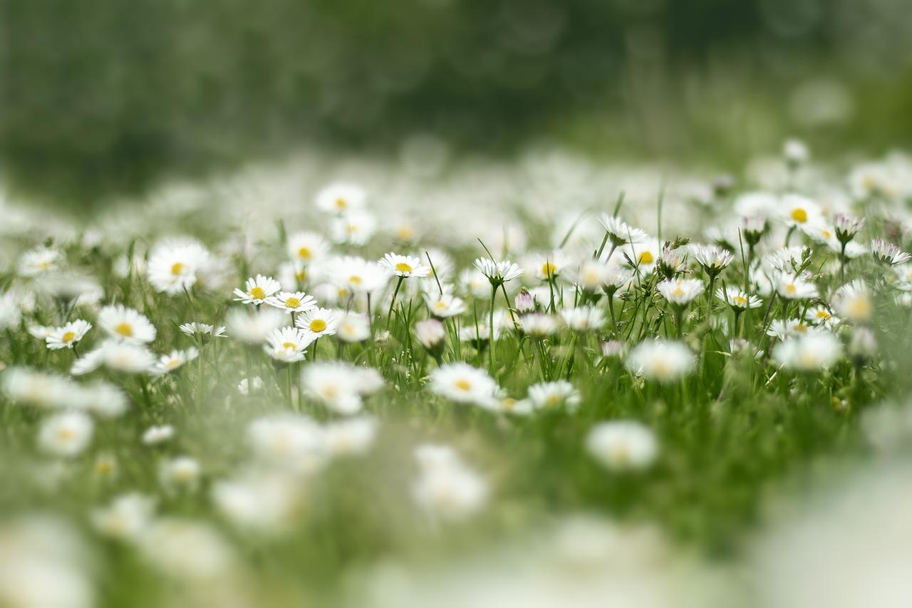 הדברת מזיקים בדשא