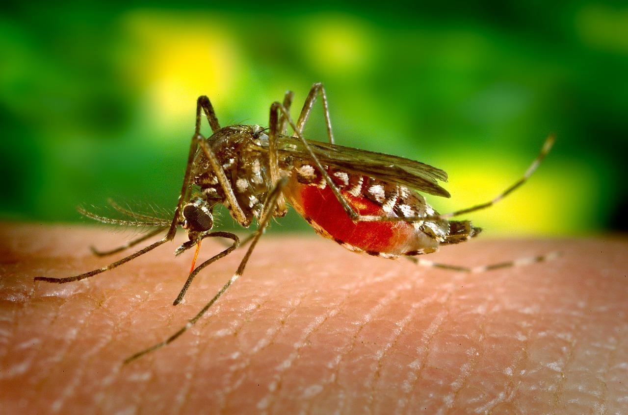 מה לעשות נגד יתושים